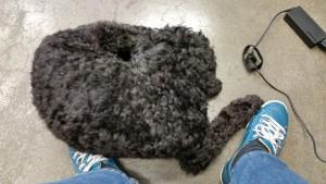 Bürohund Denny unterm Tisch, und schon lief die Schreiberei